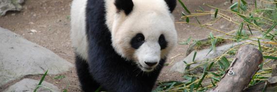 Panda - update algorytmu Google