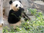 Panda update algorytmu Google